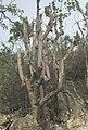 Cactus del Bosque Seco.jpg