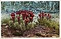 Cactus in Bloom (NBY 10260).jpg
