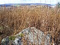 Cairnie Hill summit - geograph.org.uk - 1532507.jpg