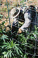 California Counterdrug Task Force supports Operation Yurok 140724-Z-QO726-008.jpg