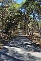 Camí de la pineda de les dunes, Guardamar del Segura.jpg