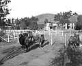 Camels at the Los Angeles Zoo, 1920 (CHS-9749).jpg