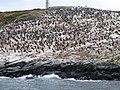 Canal de Beagle - Illa pingüins.jpg