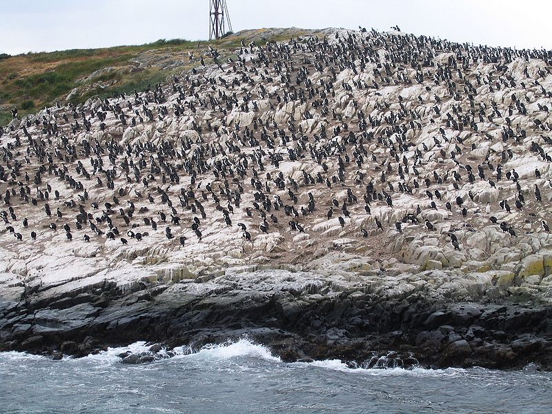 File:Canal de Beagle - Illa pingüins.jpg