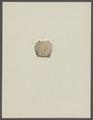 Cancer mutilatus - - Print - Iconographia Zoologica - Special Collections University of Amsterdam - UBAINV0274 094 15 0008.tif