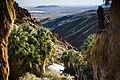 Canyon oasis (13496505983).jpg