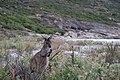 Cape Le Grand National Park, Western Australia 53.jpg