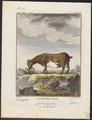 Capra aegagrus - 1700-1880 - Print - Iconographia Zoologica - Special Collections University of Amsterdam - UBA01 IZ21300263.tif