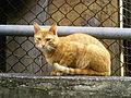 Cat in city.jpg