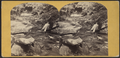 Catskill Mountain, Glen Mary, from Robert N. Dennis collection of stereoscopic views.png