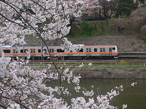 Chūō Rapid Line with Sakura.jpg