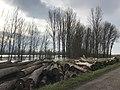 Champdivers (Jura) le 7 janvier 2018 - 2.JPG