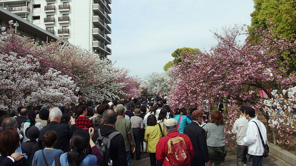 "Cherry-Blossom-Viewing through the ""Tunnel"" at Japan Mint in 201504 013"