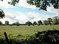 Cheshire Friesians - geograph.org.uk - 36563.jpg
