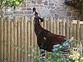 Chester Zoo (21901131028).jpg