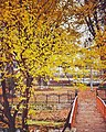 Chinar Bagh Garden @ Srinagar,Kashmir - panoramio.jpg