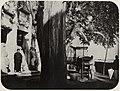 Chinesischer Photograph um 1875 - »Der Drachenbaum« (Zeno Fotografie).jpg