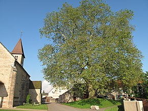 Church and platanus in Préty.jpg