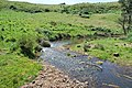 Clarkefield Jacksons Creek 001.JPG