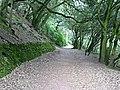 Coast Path through Mount Edgcumbe Woods - geograph.org.uk - 293572.jpg