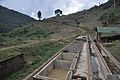 Coffee Processing – Separating Basins.jpg