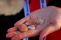 Collecting shells on Haifa beach.jpg