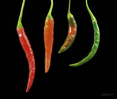 Colours of Capsicum - chili - chilli - piment.jpg