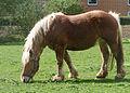 Comtois horse shedding J1.jpg