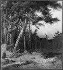 Conifers (Anders Kallenberg) - Nationalmuseum - 18214.tif