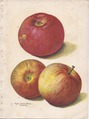 Continental Nurseries Page 1 apple - Crimson Beauty, North Star.tiff