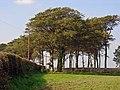 Copse near Glaspant, Blaenporth - geograph.org.uk - 967728.jpg