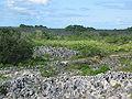 Coral pinacles on Nauru2.jpg