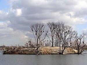 Walthamstow Reservoirs - Cormorant Island