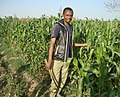 Corn farm weeding work.jpg
