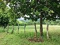 Corozalito, Provincia de Guanacaste, Costa Rica - panoramio (7).jpg