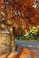 Cottingham Snuff Mill Lane autumn - panoramio.jpg