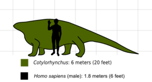 Cotylorhynchus scale.png
