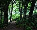 Cragside Estate - geograph.org.uk - 920147.jpg