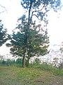 Cristo em Poços de Caldas - MG, Brasil - panoramio (4).jpg
