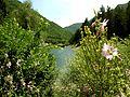 Crni Drim River 83.JPG