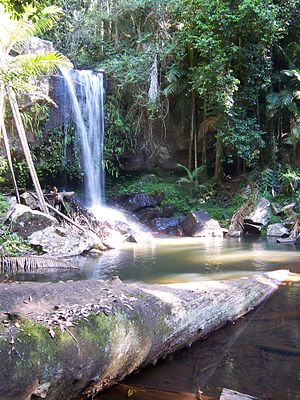 Tamborine National Park - Curtis Falls in Tamborine National Park