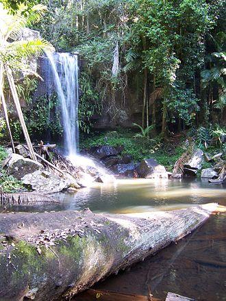 Tamborine National Park - Curtis Falls in Tamborine National Park