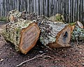 Cut tree trunks at The Plough in Lower Beeding, West Sussex, England.jpg