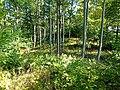 Długota (Opawskie Mountains), 2020.09.11 10.jpg