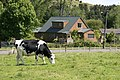 Dairy in the community - panoramio.jpg