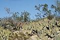 De San Rafael a la Noria de las Animas ,RAMOS ARIZPE COAHILA - panoramio (28).jpg