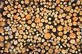 Dead-Tree-Pattern (16225850325).jpg