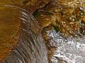 Detail of fresh water.jpg
