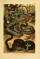 Deutschlands Amphibien und Reptilien (5982228766).jpg