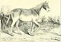 Dictionnaire d'hippiatrique et d'équitation - ouvrage où se trouvent réunies toutes les connaissances hippiques (1848) (14589438509).jpg